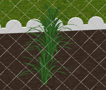 For The Following Kind Of Flowerbed Which Shows The Upper Part Of A Yucca It Is Easier To Place The Plant At A Lower Level And Draw A Simple Room At The