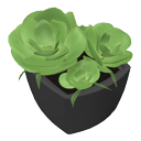 Succulent plant by Nmn9