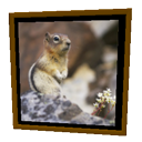 Squirrel Frame by Emmanuel Puybaret