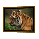 Tiger Frame by Puybaret