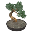 Bonsai par Scopia
